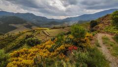 Terre et vignoble de Banyuls (Natha34) Tags: banyuls vigne nature colline