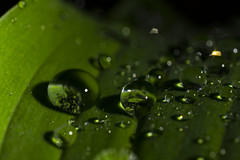 After the Rain (stopdead2012) Tags: macromondays lowkey macro water drops beads green leaf