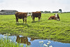 Curious cows ... (0184) (Le Photiste) Tags: clay curiouscowsnearhindeloopenfryslânthenetherlands curiouscows hindeloopenfryslânthenetherlands fryslânthenetherlands thenetherlands nederland cows ditch clouds landscape waterscape nature naturesprime rainbowofnaturelevel1red planetearthnature planetearth grass simplygreen reflections afeastformyeyes aphotographersview autofocus artisticimpressions blinkagain beautifulcapture bestpeople'schoice creativeimpuls cazadoresdeimágenes canonflickraward digifotopro damncoolphotographers digitalcreations django'smaster friendsforever finegold fairplay greatphotographers groupecharlie peacetookovermyheart clapclap hairygitselite ineffable infinitexposure iqimagequality interesting inmyeyes livingwithmultiplesclerosisms lovelyflickr lovelyshot myfriendspictures mastersofcreativephotography niceasitgets ngc photographers prophoto photographicworld photomix soe simplysuperb saariysqualitypictures showcaseimages simplythebest simplybecause thebestshot theredgroup thelooklevel1red toosexy vividstriking worldofdetails wow yourbestoftoday oddview meadow