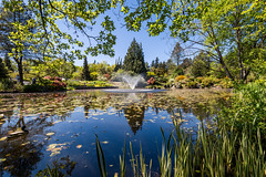 VanDusen Botanical Garden-102 (_futurelandscapes_) Tags: vandusen botanical garden spring vancouver bc canada green flowers rhododendrons japanese maple trees water reflection fountain beautiful peaceful relaxing nature landscape beauty natural sunny