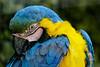 colourful portrait (@Katerina Log) Tags: colorful portrait bokeh depthoffield daylight bird katerinalog wild wildlife nature natura closeup colour sonyilce6500 attikazoopark