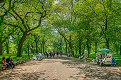 Strolling on the Promenade (Bob C Images) Tags: spring park street promenade centralpark nyc newyork paintings people trees oaks leaves light contrasts