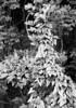 May 22 (Holden Richards) Tags: 240 northcarolina 1905koronaview fomapan100 5x7film hc110 viewcamera antiquecamera 5x7camera largeformat analog bn bw orange county film 5x7 smalltown hillsborough holdenrichards gclaron240mmf45 blackandwhite enoriver tranquilscene hillsboroughnc spring 2018