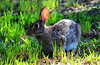 Bunny 2 (Autophocus) Tags: bunny hare rabbit animal mammal feral fur ears eyes vegetation grass nature wild