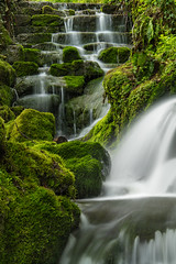 Badger Falls moss on the rocks (alan.dphotos) Tags: rock rocks trees forest wood woods branches tree moss green leaves leaf waterfall heather copper grass hill whitewater badgerdinglewaterfall badgerdingle bridgenorth shropshire landscapephotography water river