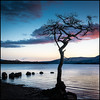 Sunset on Loch Lomond (Renton Lad) Tags: nikond810 nikon70200mmf28 lochlomond tree trossachs sunset landscape balmaha