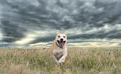Run (VisualTheatrics) Tags: running run dog dslr detail digitalphotography dogs dogportraits dogportrait rescuedog free freedom speed speeds animal animals animalportrait landscape landscapes local beautiful beauty