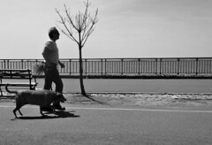 The Perfect Walk (Robert S. Photography) Tags: walkway waterfront man dog walking tree bench spring warmth scenery brooklyn bay caesarsbay nyc bw monochrome sony dscwx150 iso100 may 2018