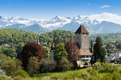 Schloss Spiez | Berner Oberland | Schweiz (stgenner) Tags: alpen berge berneroberland frühling natur schlossspiez spiez stefangenner