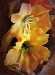 Dreaming of flower time . . . (JLS Photography - Alaska) Tags: flowers flower art artwork artistic digitalart digitalmanipulation jlsphotographyalaska yellow yellowflowers macro macroshot