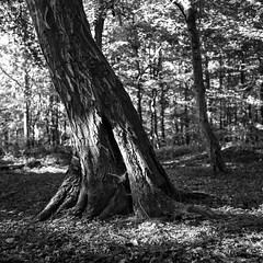 130518foma200005 (salparadise666) Tags: zeiss ikon super ikonta 53216 opton tessar 80mm nils volkmer medium format vintage folding analogue film camera fomapan 200 hannover region niedersachsen germany north german plains lowlands monochrome bw black white landscape square 6x6