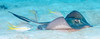 24_DSC_9267 (edpdiver) Tags: turksandcaicos scuba diving coral reef underwater