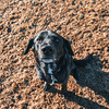 Cortana (Tony Webster) Tags: cortana flandraustatepark minnesota newulm dog unitedstates us