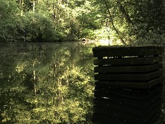 duisburgerwald (sefakrky) Tags: duisburg wald forest green sun trees baumen zug train rails water wasser small lake germany life day tag nature nrw iphone7plus