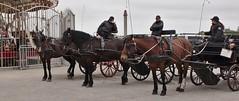 Horsies! (Darkhorse Winterwolf) Tags: belgium belgïe horse horses oostende