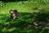 _DSC1977.jpg (Burghart-Alexander) Tags: orte deutschland pflanze poing wildpark tiere bäumeundsträucher europe bayern bundesland umwelt