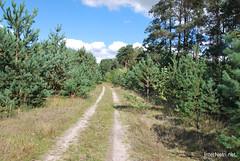 Волинський ліс Лісова дорога InterNetri Ukraine 1711653998