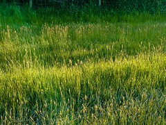 Light & shade (allybeag) Tags: spring crosby grass lightandshade meadow long evening light shadow xperia phonepic