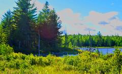 Maine Wilderness - Vivid (RockN) Tags: stumppond august2016 baxterstatepark maine newengland