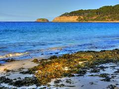 Depot Beach IV (elphweb) Tags: hdr highdynamicrange nsw australia beach water lake sea ocean sand sandy seaweed waves surf
