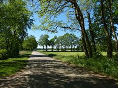 Green landscape (joeke pieters) Tags: 1390516 panasonicdmcfz150 ratum winterswijk achterhoek gelderland nederland netherlands holland landschap landscape landschaft paysage schaduw shadow groen green
