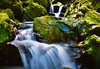 Exhilarating flow (chikaraamano) Tags: blaze valley stream moss green flow water young leaf pale shallow spring beauty lovely entourage starts forest trees fresh felt pleasant time space tasty refreshing grass greenrocks nature outdoor