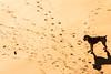 Chucho y pelota (mandoft) Tags: gijón perro amanecer playasanlorenzo contraluz arena farola pelota principadodeasturias españa es