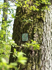 1 (silvy-s) Tags: nature tree borytucholskie m43 epl1 forest