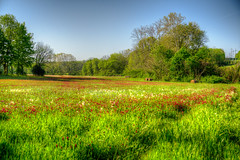 DMT_20180502073732 (Felicia Foto) Tags: grass field trees sky openfield clover hayrolls williamsoncountytennessee middletennessee thompsonsstationtennessee rural smalltown tennessee allrightsreserved denisetschida critzlane distributionlines earlymorning 2xp hdr photomatix photoshopcc2018 condensationtrail mtemc nikond600 nikon d600 tallgrass green wildflowers pasture outdoors openspace red powerlines electriclines clearsky bluesky geotagged pastoral flora