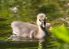 New friends (LuckyMeyer) Tags: wilgans vogel bird