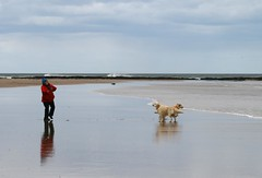 Two Heads Are Better Than One (RoystonVasey) Tags: canon eos 400d 70300mm usm zoom northumberland seahouses bamburgh beach sea sand surf dog
