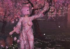 Sweet Sakura (Serena Reins) Tags: confession poses photography secondlife bessom hair lashes belle epoque robe sheer sakura cherry blossom maitreya lara mystic trees tea house catwa uma