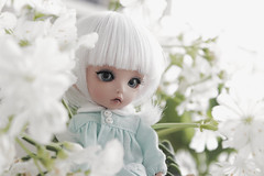 Spring Flowers (Loony-Doll) Tags: luna pukiféeluna fairyland bjd doll dolls custo custom customisée makeup pukiféetan tanskin tan wig formydoll glass eyes pukifee
