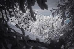 Winter (Strocchi) Tags: winter inverno neve snow campigna romagna italy canon eos6d 24105mm tree cold freddo
