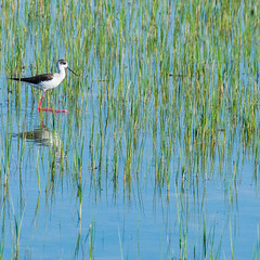 En passant par la camargue (thierrymuller) Tags: mario sambuc nature animal aves mamanano elpadrepicture d610 camargue