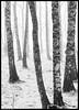 _DSC6665-Edit-copy-2.jpg (jezqio) Tags: uppsala nikon winter naturephotography nature mist frost sweden fog nikkor d810 24120 snow
