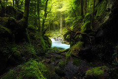 """ E C R I N "" (everzura) Tags: pyrenees landscape woodland forest green verzura water tree foret waterfall cascade france fantasy light root sunray"
