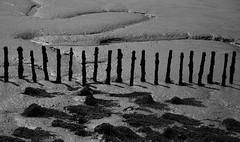 Bradwell-on-Sea (neil mp) Tags: essex coast bradwellonsea bradwell blackwaterestuary riverblackwater dengiepeninsula walk path circularwalk blackwater bradwellcreek mud posts staves blackandwhite monochrome bnw