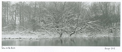 Snow on the Avon (carwyn2) Tags: salisbury wiltshire avon river trees shen hao 4x10 300mm nikkor pyrocat fp4 ilford contact print largeformat lodima landscape bw