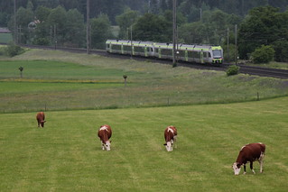 BLS Lötschbergbahn Lötschberger RABe 535 zwischen Gümligen und Rubigen im Kanton Bern der Schweiz