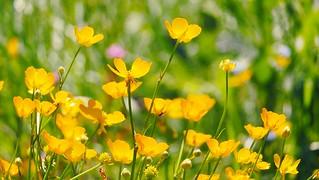 Flowers - 5136