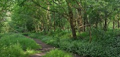 Holtingerveld (henkmulder887) Tags: holtingerveld natura2000 zwdrenthe oerbos kruiden kruidenlaag wild ree vos das vogels vogel natuur natur nature natura holland thenetherlands groen bos wald forest