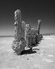 A Stick in the Mud (dejavue.us) Tags: bombaybeach california d850 abandoned nikon desert saltonsea 1835mmf3545d nikkor blackandwhite pilings monochrome