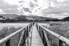 Embalse de Uña (profesorxproyect) Tags: cuenca serrania fields water agua uña paisaje wood d7100 tokina nikon nature tokinaatx1116 byn blackandwhite bw blancoynegro bn