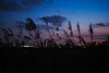 Skytree|晴空塔 (里卡豆) Tags: katsushika tōkyōto 日本 jp 東京都 olympus epl9 25mm f12 pro olympus25mmf12pro skytree 晴空塔 天空樹