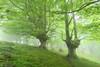 The world of dreams (Hector Prada) Tags: spring forest fog mist leaves mystic dreamy magic nature mood primavera bosque niebla bruma hojas mágico ensueño paísvasco basquecountry árbol