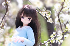 Cloud Garden (Hazy June) Tags: azone azoneinternational azonedoll yuzuha pureneemo fashiondolls spring garden blossom cherryblossom canon50d canoneos50d kawaii