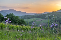 1__.jpg (Nu Mero) Tags: coucherdesoleil paysage vignoble valléedevillé nature leverdesoleil sunrise sunset albé grandest france fr