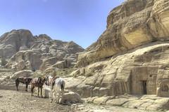 Petra (G-daddyArt) Tags: jordan petra holyland sandstone canon50d horse rosecity desert archaeology nabateankingdom canyon alsiq cliffs alkhazneh temple
