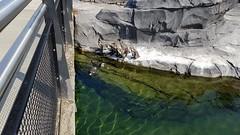 20180523_105046 (TheSlayerNL) Tags: wildlands emmen zoo dieren animals adventure wildlandsadventurezoo